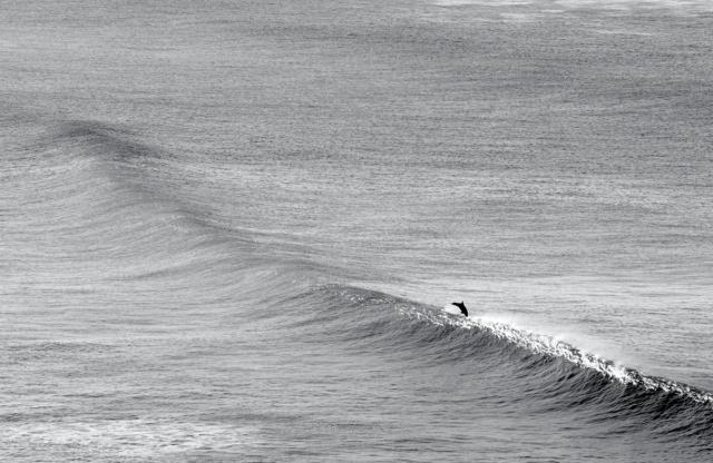 photo dauphin vague noir et blanc