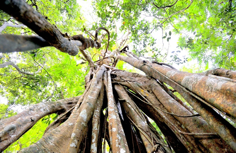 photo nature arbre racines